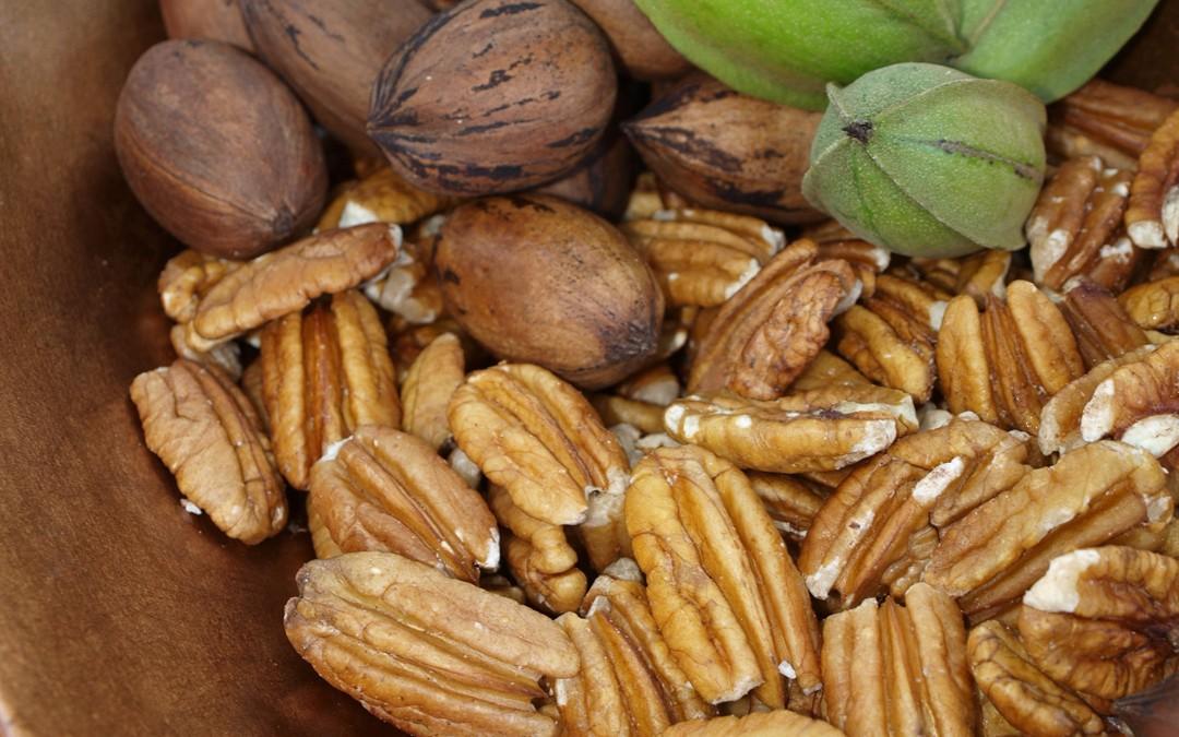 PECANS: Favorite Fruit of the Magnolia State