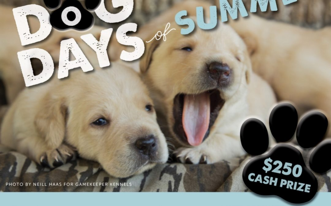 DOG DAYS OF SUMMER: PET PHOTO CONTEST